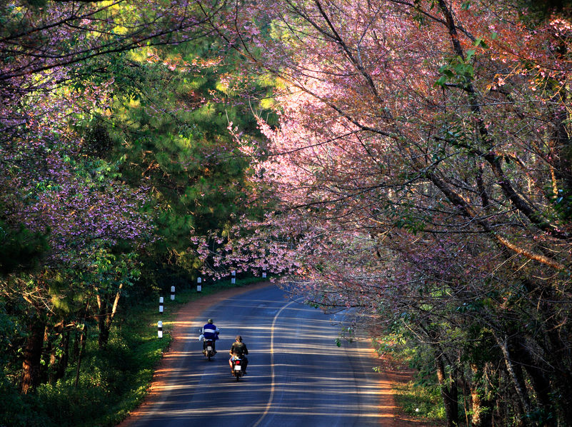 2020年 お花見ドライブ静岡おすすめスポット